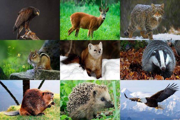 Рідкісні тварини України